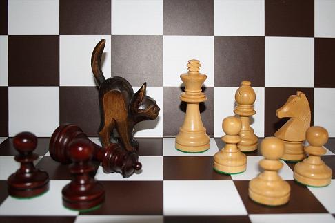Turnierhinweise Frauenschach
